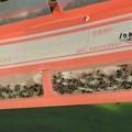 Photos: アノールホイホイに蟻の大群
