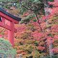 28.11.10志波彦神社鳥居付近の紅葉
