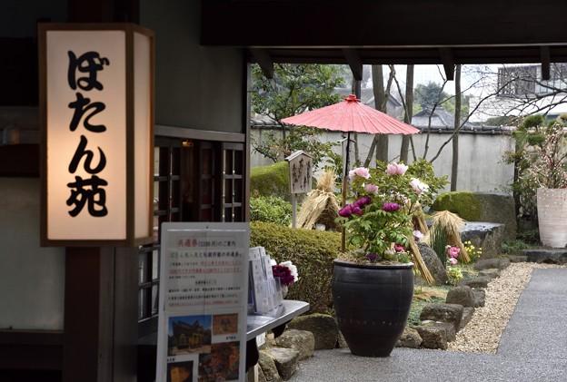 写真: 170209上野公園 (4)
