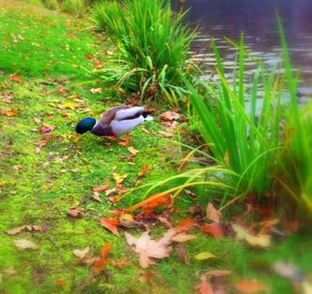 中野区 江古田 バイオリン 個人レッスン ヴィオラ 吉瀬弥恵子 Y's音楽教室 芸術の森の鴨