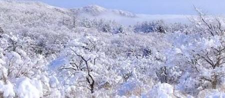 東京・中野・練馬・江古田、ヴァイオリン・ヴィオラ・音楽教室 雪国?