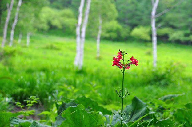 写真: 高原の赤