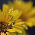 写真: お花がみえました~
