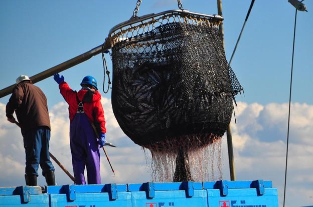 写真: 大漁だ~~♪♪