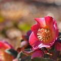 写真: 歓喜のピンク