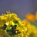 写真: 春のふくらみ