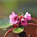 写真: 春はピンクで