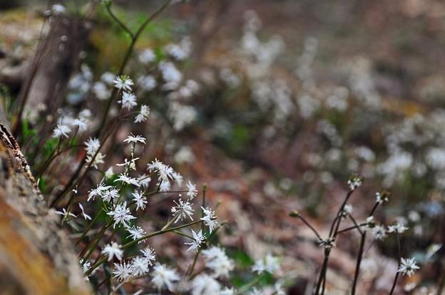 写真: 白いあつまり