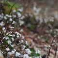 Photos: 白いあつまり