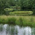 渋池の浮島