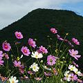 榛名富士とコスモス