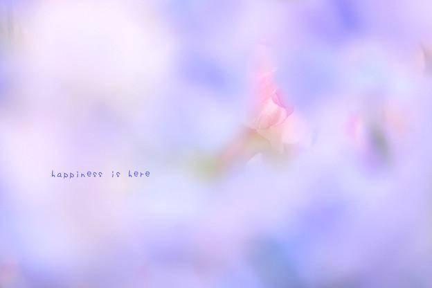 花びらを照らす光