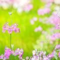 春の暖かさに