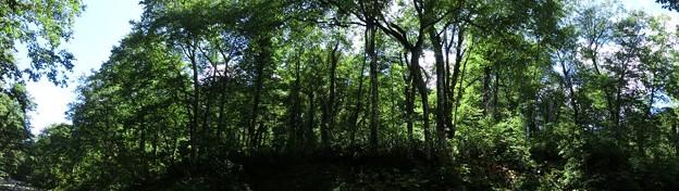 ブナ林 滝川上流 2012-09-26-wl-66
