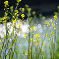写真: 春の小川