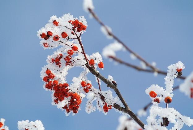 樹氷をまとって