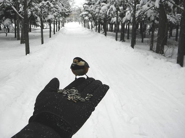 手に乗る野鳥