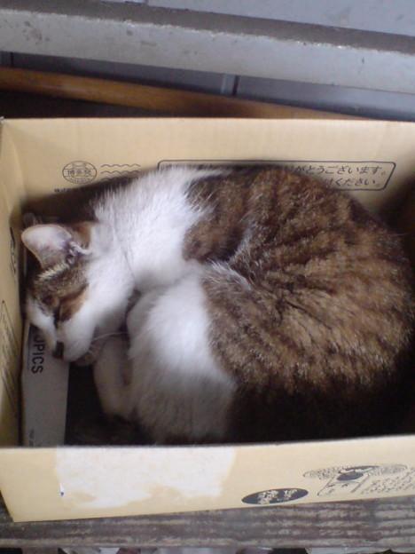 今日もお疲れさまでした。東島シマ子さんもオヤスミなさい♪(*´∇`*)