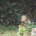 Photos: 野生猿の秋は厳し(2)