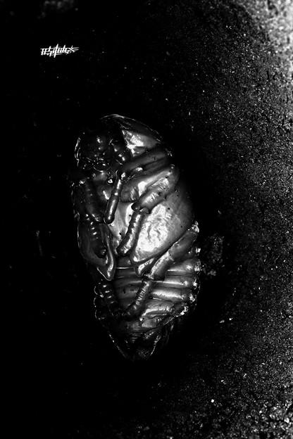 Beetle Dark