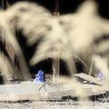 Photos: 雪隠