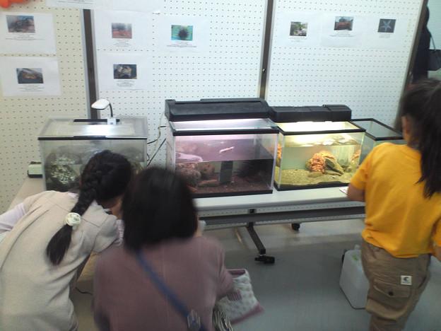 理学部祭 恒例水族館