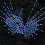 wonderful_fish