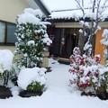 写真: 初雪の様子です