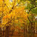 写真: 深まる秋.4