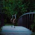 写真: 飛んで渡ることもできますが、なにか?
