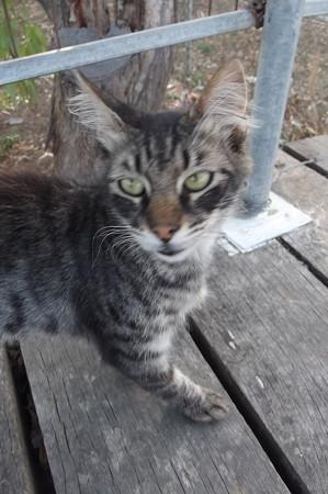 ラルナカのネコ0623