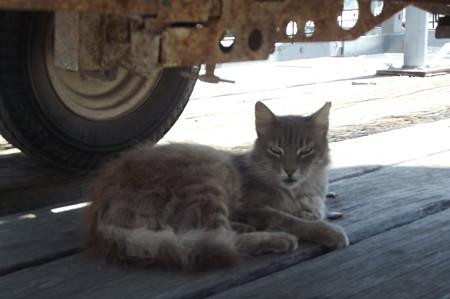 ラルナカのネコ0624
