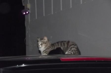 リマソールのネコ0626