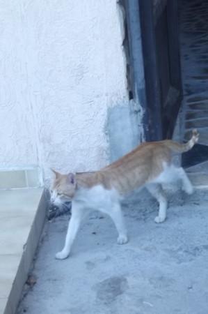 リマソールのネコ0628