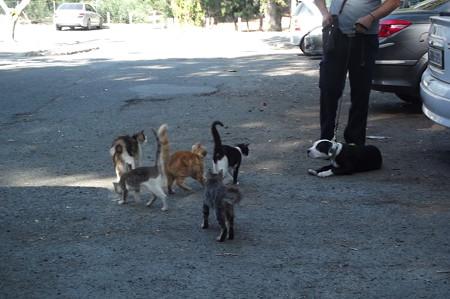 リマソールのネコ0629