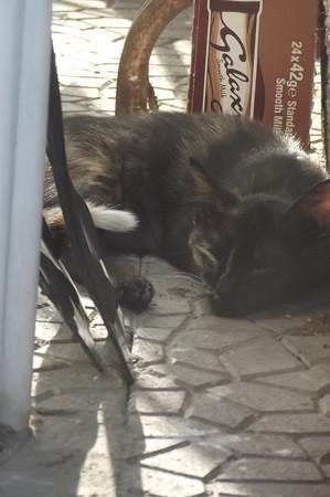 ラルナカのネコ0723