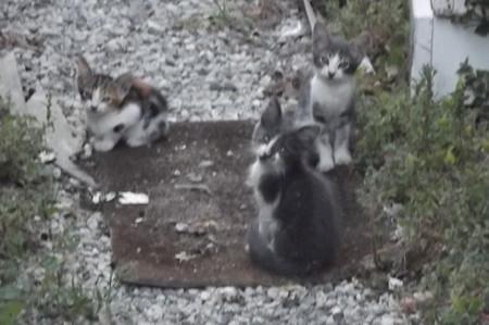 ラルナカのネコ0724
