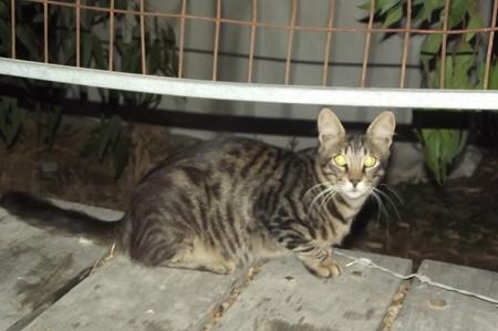 ラルナカのネコ0725