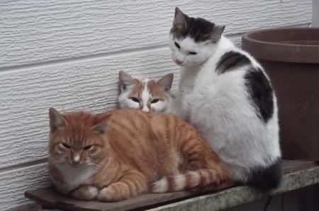 子ネコたち1130