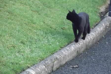 キルケニーのネコ0120