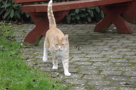 キルケニーのネコ0121