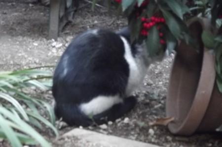 白黒ネコその2 0212