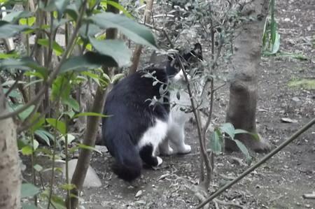 白黒ネコ0212