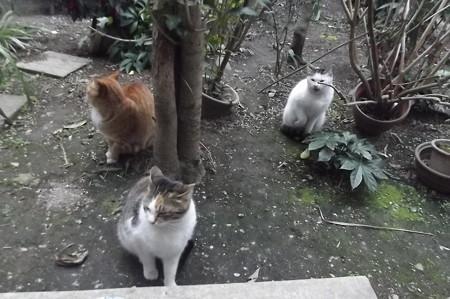 ミケママ、ミニチグ、黒ブチ0214