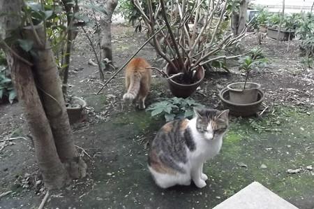 ミケママ&ミニチグ0227