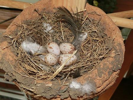 四個(家の中の巣)