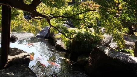 葉山しおさい公園