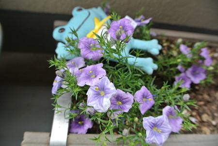 この青い花の名前は?